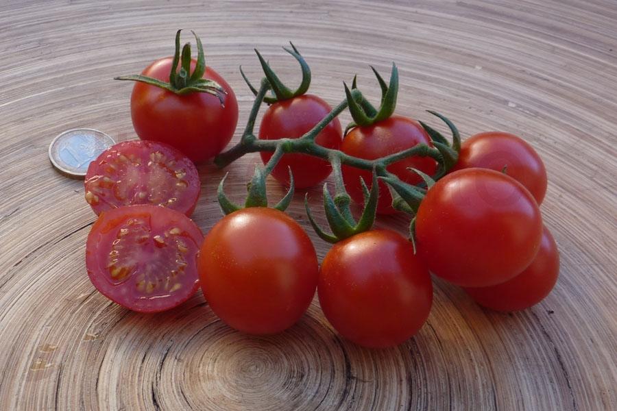 Tomate 'Dicks Cherry', Saatgut