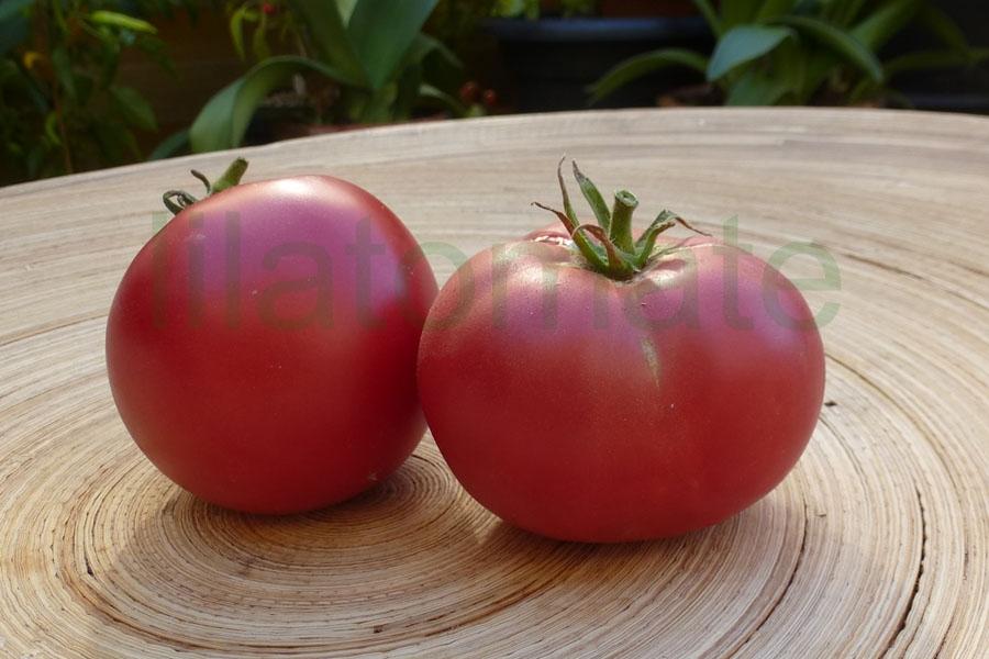 Tomate 'Berner Rosen' Saatgut