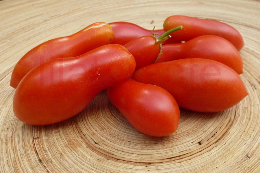Tomate 'Carnika'
