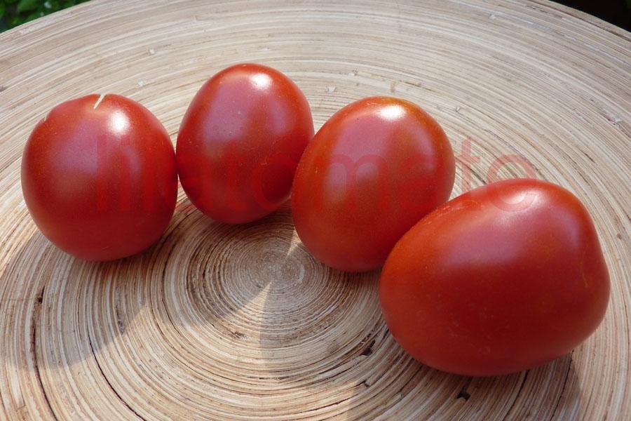 Tomate 'Omas Beste'