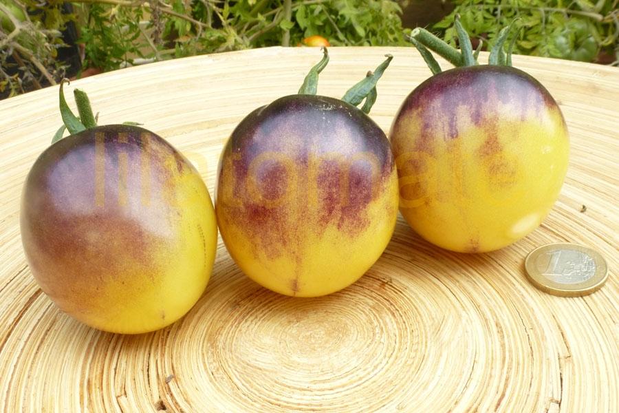 Tomate 'White Purple'