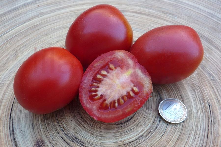 Tomate 'De Berao, rot' Saatgut