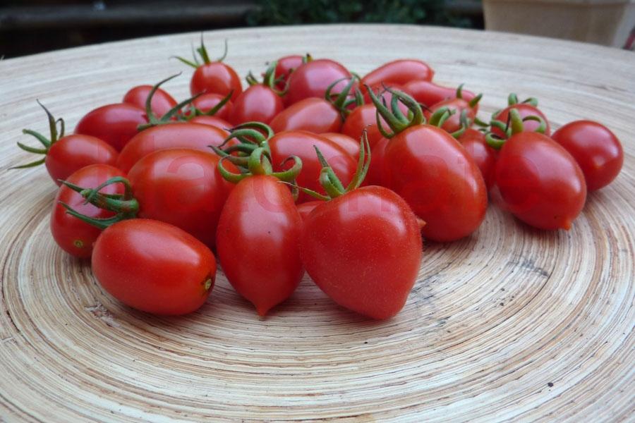 Tomate Sortenmischung 'Datteltomaten' Saatgut