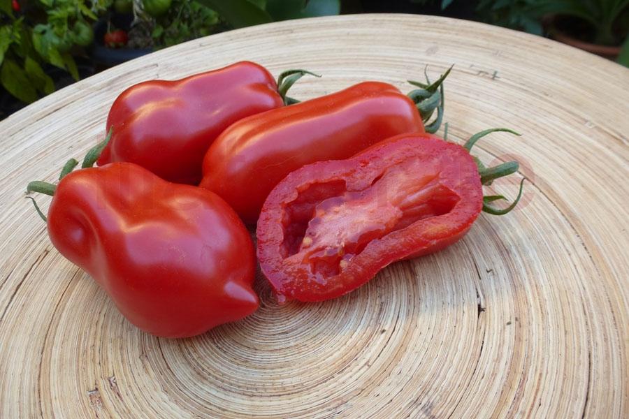 Tomate 'Andenhorn aus Sizilien San Marzano Typ, Arbeitstitel' Saatgut