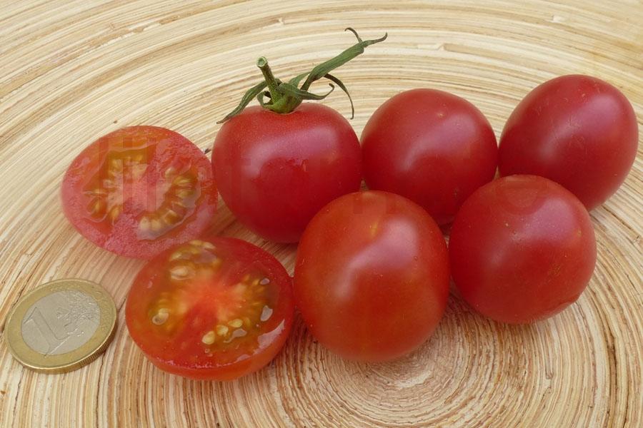 Tomate 'Zuckertraube' Saatgut
