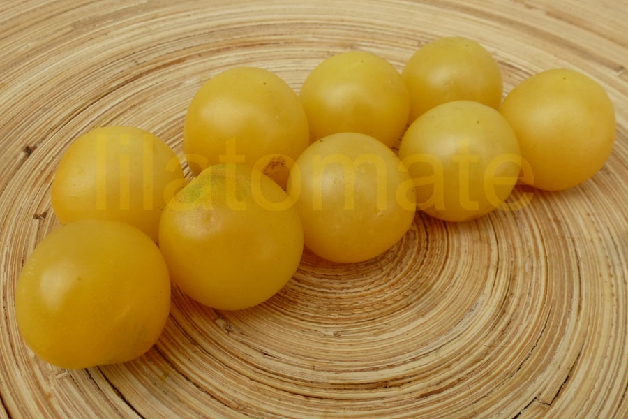 Tomate 'White Cherry' (Arbeitstitel) Saatgut