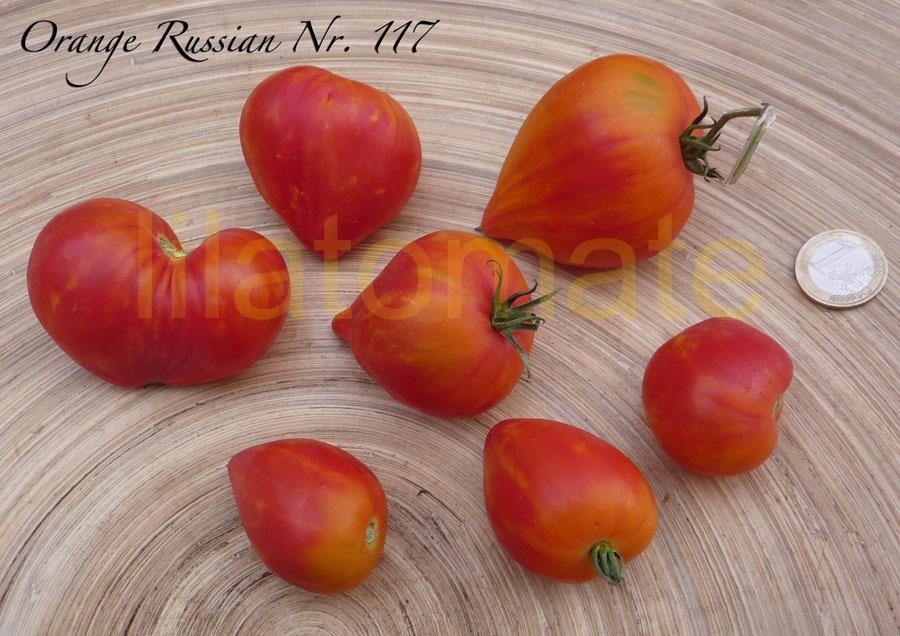 Tomate 'Orange Russian' Saatgut