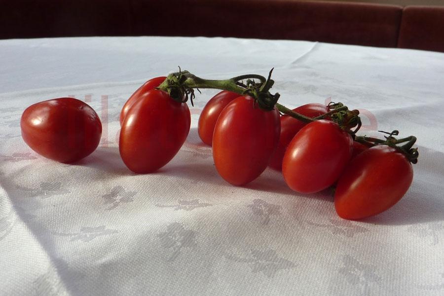 Tomate 'Datteltomate aus Bozen' (Arbeitstitel)