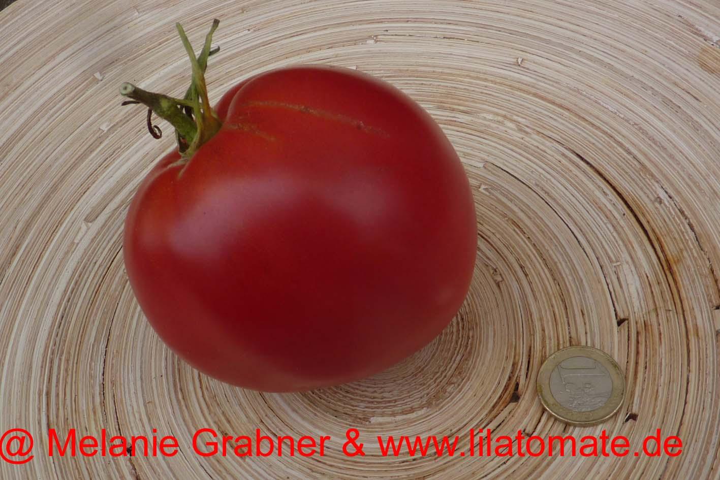 Tomate 'Giant Plum' Saatgut