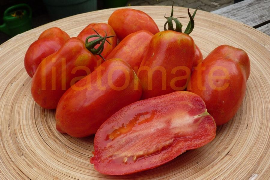 Tomate Sortenmischung 'Längliche Tomaten' Saatgut