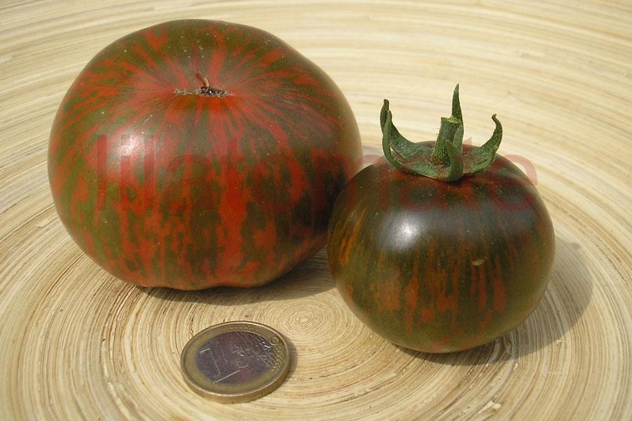 Tomate 'Black Zebra'