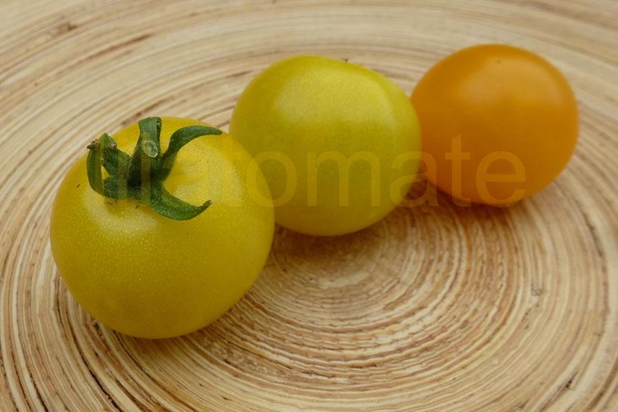 Tomate 'Gelbe Topftomate' Saatgut