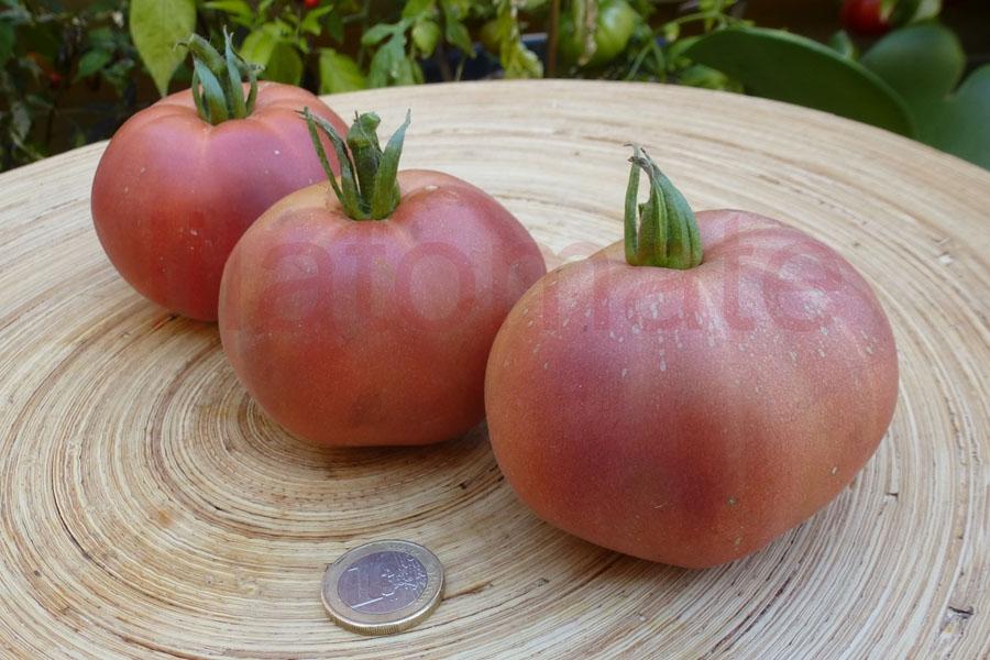 Tomate 'Ananas noir', 'Schwarze Ananas' Saatgut