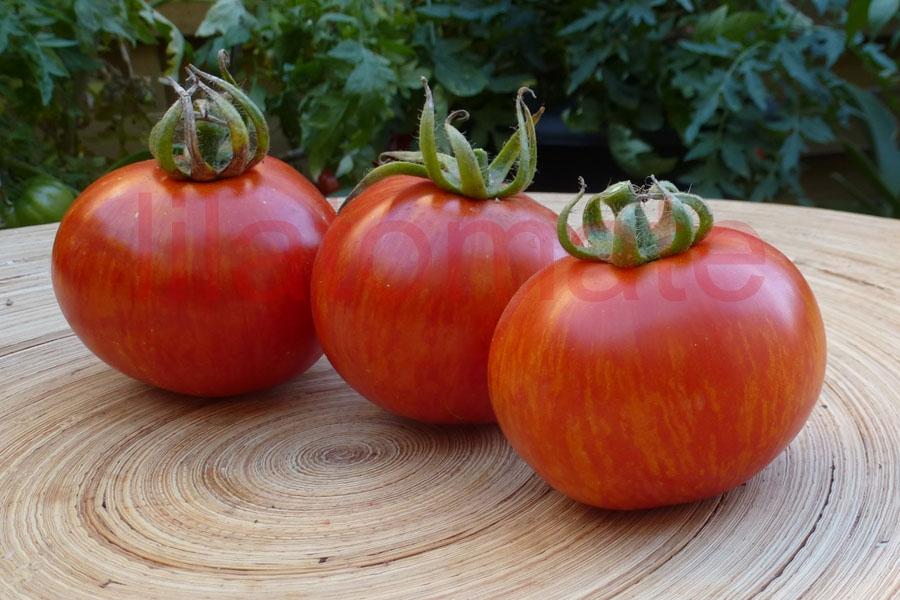 Tomate 'Rotes Zebra'