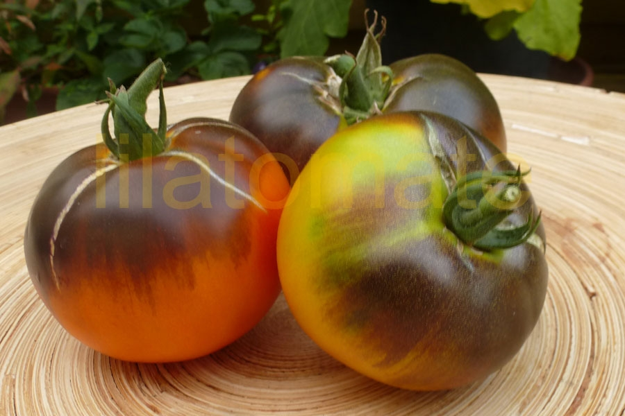 Tomate 'Blaue Ananastomate' Saatgut