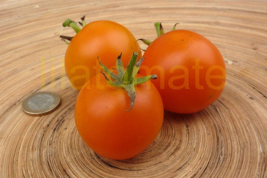 Tomate 'Orange Favourite'