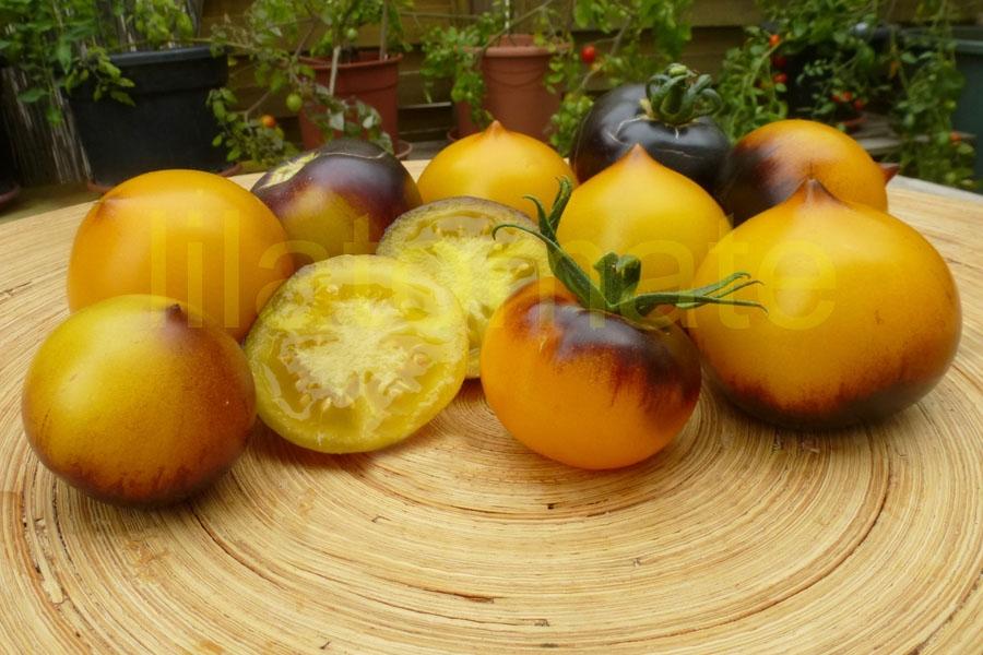 Tomate 'Blue Orange' Saatgut