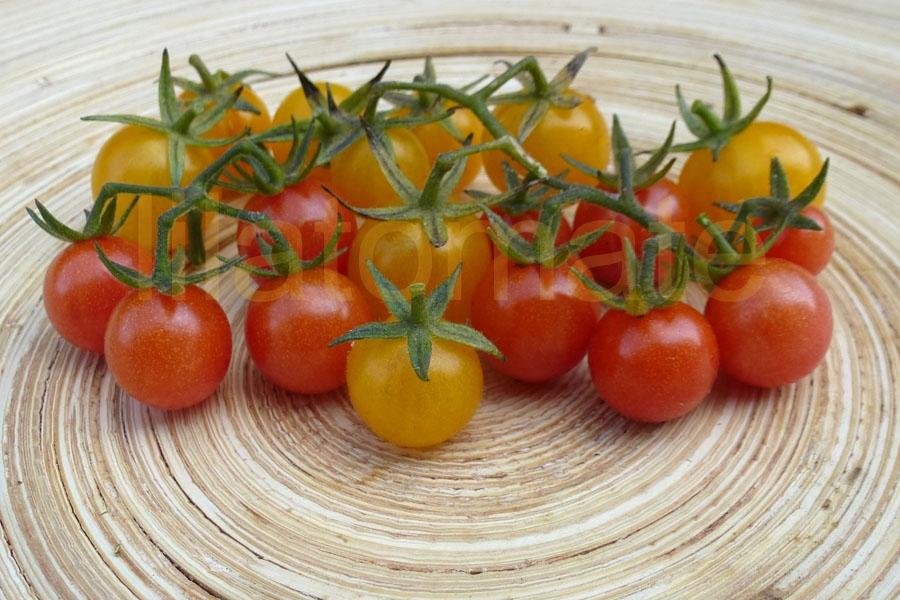 Tomate Sortenmischung 'Wildtomaten' Saatgut