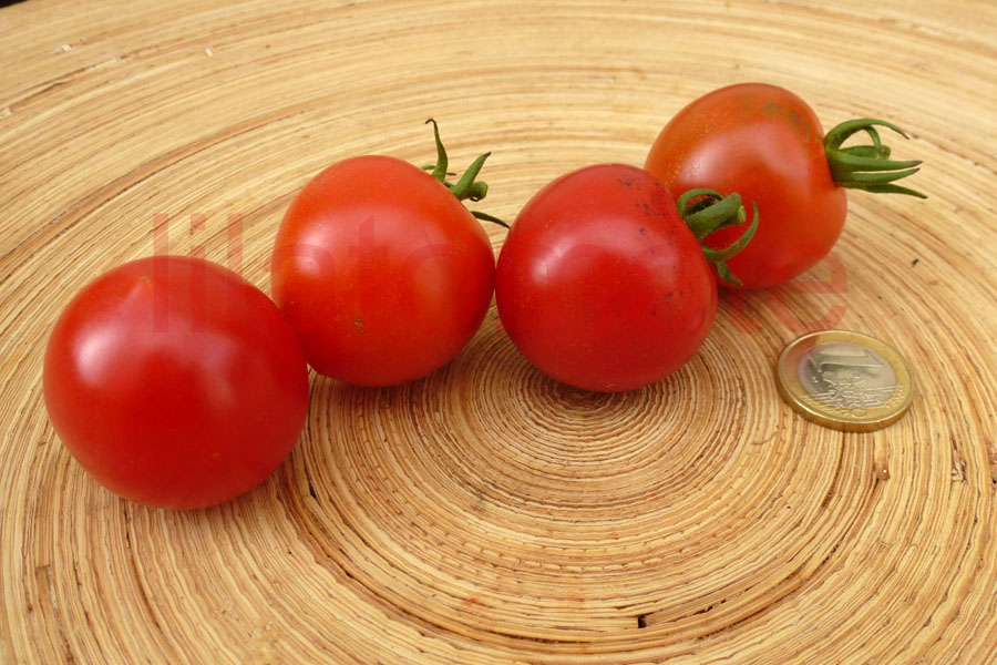 Tomate  'Ruthje'