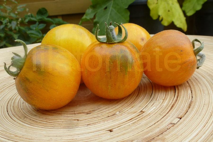Tomate 'Pansy Ap' Saatgut