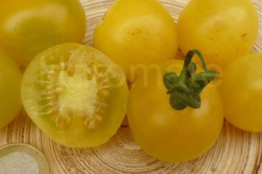 Tomate 'Gelbe Cocktail' Saatgut
