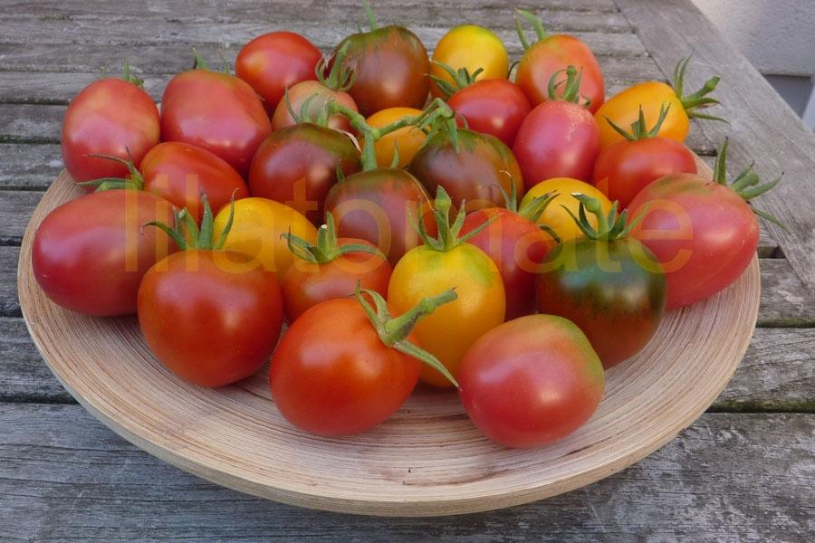Tomate Sortenmischung 'De Berao, bunt' Saatgut