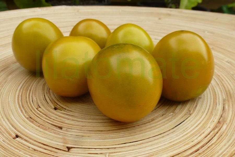 Tomate 'Grüne Traube' Saatgut
