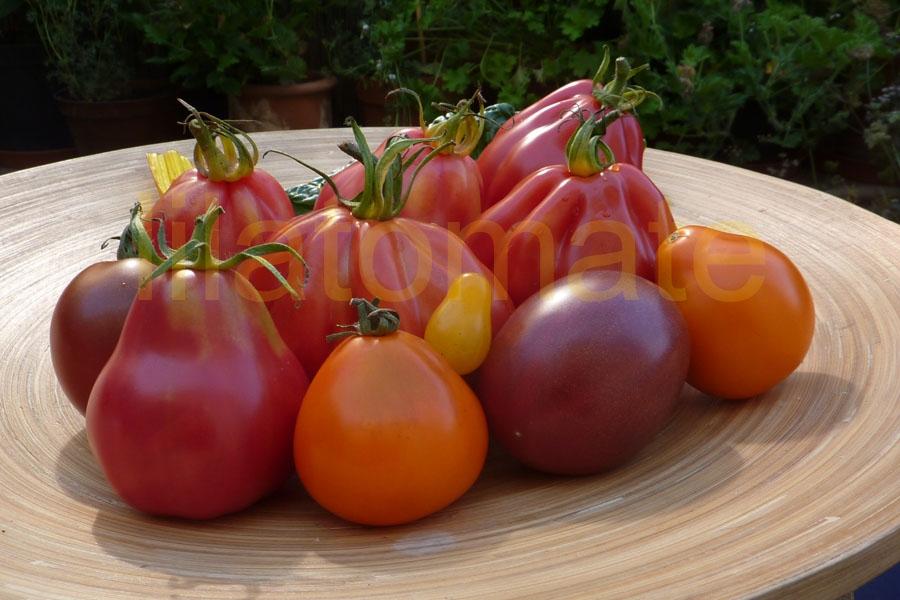 Tomate Sortenmischung  'Birnenförmige Tomaten' Saatgut
