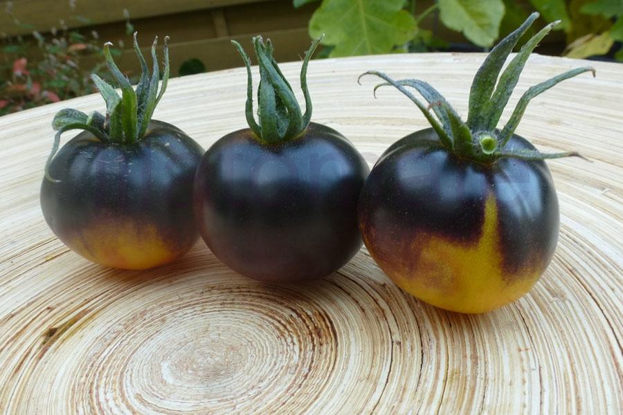 Tomate Sortenmischung 'Blaue Tomaten', 'Lila + blaue Tomaten' 'Blaue Tomaten' Saatgut