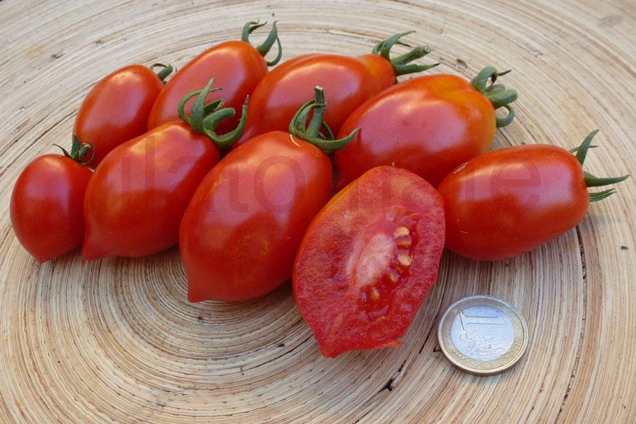 Tomate 'Tropfenförmige von Linosa' Saatgut
