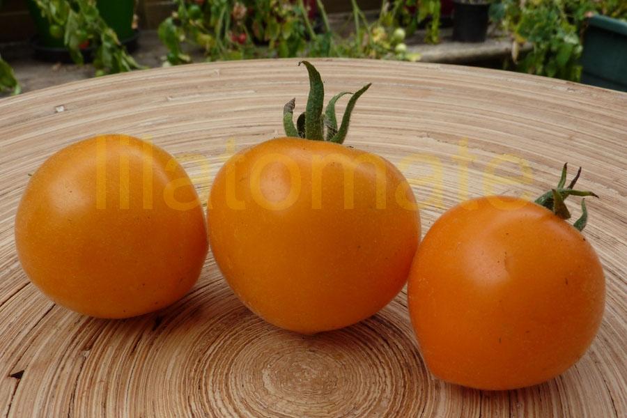 Tomate 'Allure' Saatgut