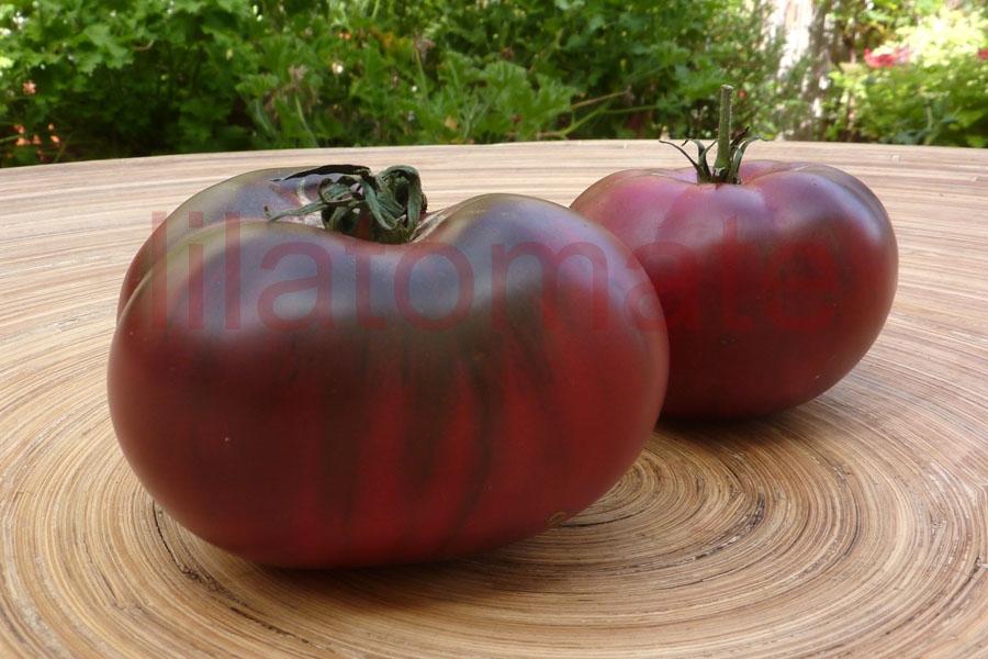 Tomate 'Sibirische Fleischtomate, lila' Saatgut